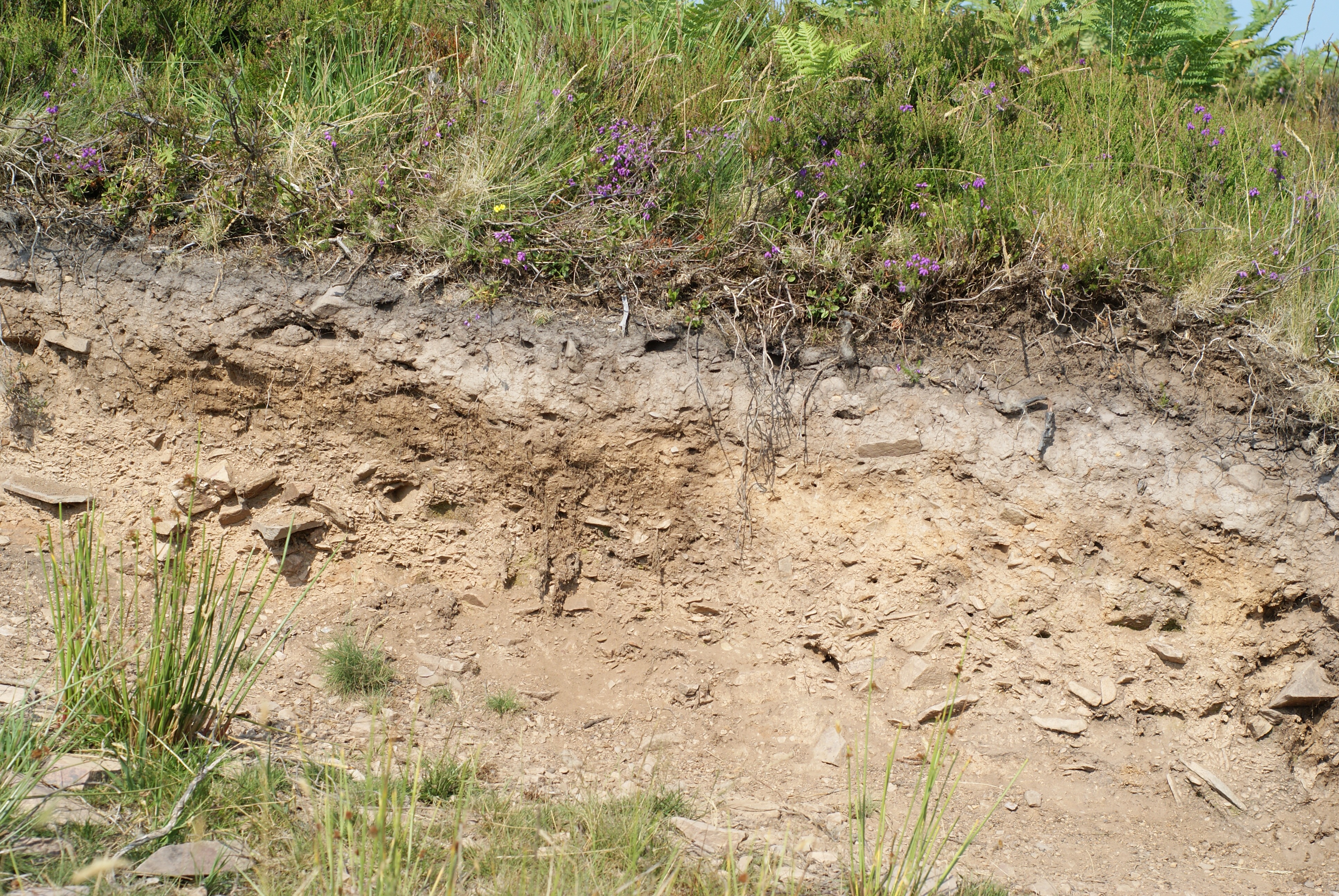 Manchester ecologist s warning on earth s imperiled soils for Earth or soil