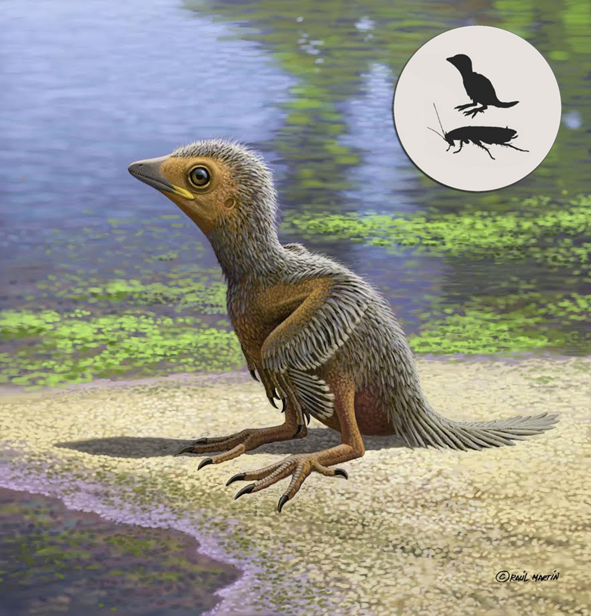 Baby bird fossil is 'rarest of the rare'